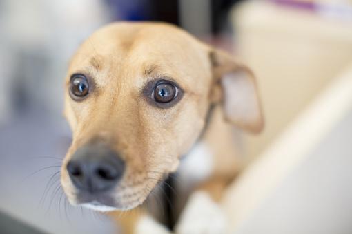 Tierärztepraxis Freund Lu Unsere Leistungen